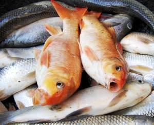 Il pesce fa bene alla vista (specialmente quello grasso)