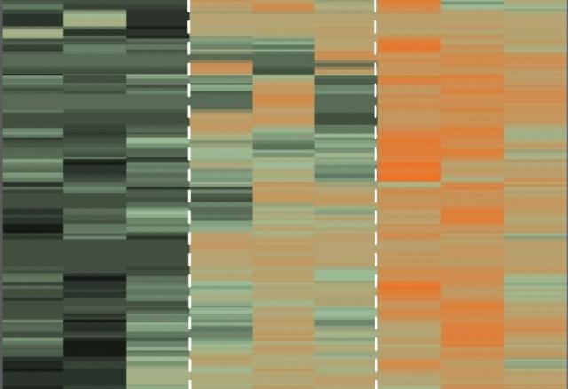 Mappa delle proteine presenti nella coroide (Immagine Vinit Mahajan, Lab University of Iowa, Usa)