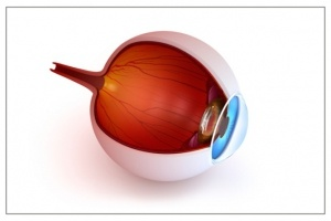 bulbo_oculare-ricostruzione_virtuale-photospipce10423424e67996fe88427de2fc794e.jpg
